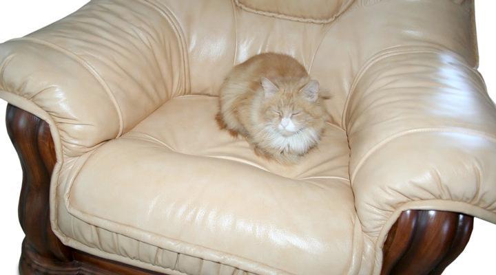 Кожаное кресло Grizzly (Гризли) - 6
